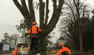 Tree Surgery Hertfordshire