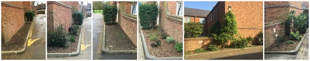 Tree & hedge, Shrub & Border Planting