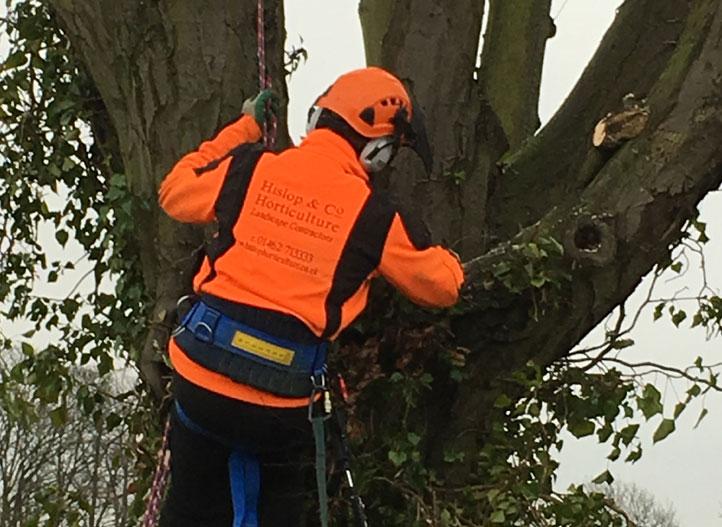Arboriculture Tree Work